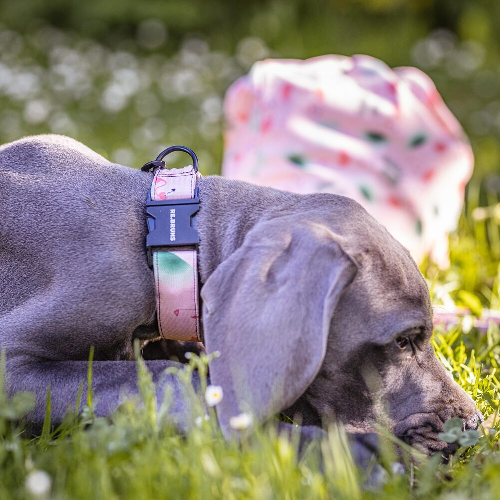 obojek rebruns plamenaci ekologicke doplnky pro psy eshop 6
