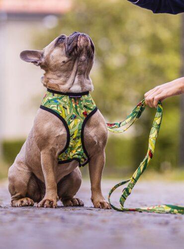 Re.Bruns Ekologické doplňky pro psy